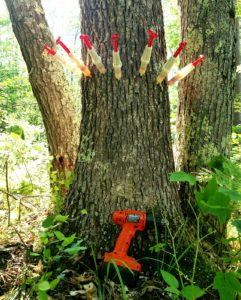 Save Your Trees From Oak Wilt With Diy Tree Injection