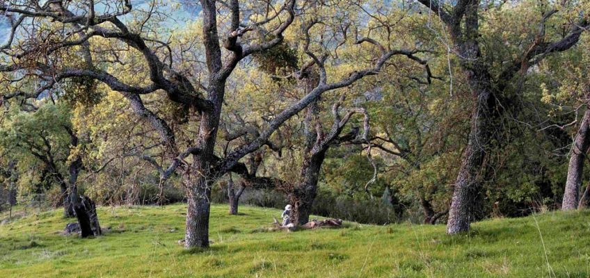 Save Your Trees From Sudden Oak